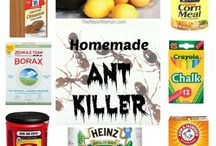 Gardening - Pests - flies, ants, whitefly, etc / Chemical free or by planting to rid the pests