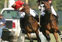Polo.Horse