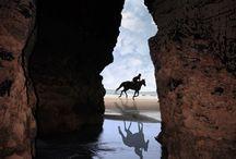 HORSE / by Mary Dumke
