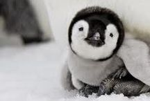 World Penguin Day 4/25 / What's not to love about penguins?