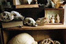 |Bones|