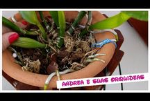 Tipos orquídeas