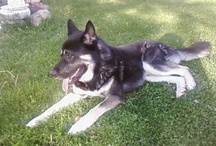 Calm Dog / We specialize in calm for dogs, naturally. Pin pictures of your relaxed pups right here.