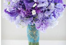 Violet - Фиолетовый