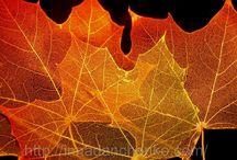 Скелетирование ЛИСТОЧКИ осень
