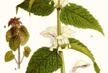 Pflanzen Illustrationen