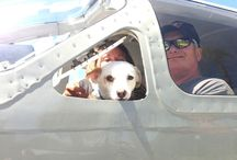 Heartwarming Moment / An organization of volunteer pilots in US arrange flights to transport dogs from shelters too full to those that have space to save the dogs from euthanasia.