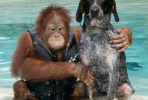 Animales. Very cute!!!! / Toda clase de animales, cachorros, mamás con sus bebés, etc....