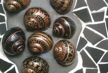 Окрашенные морские раковины
