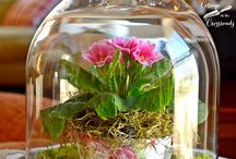 kwiaty w kopułkach