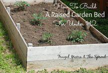 Aspiring gardener / by Jen Quiring