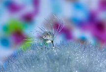 Flores - Detalles Bellos
