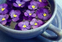 PURPLE damn it / amaranthine, amethyst, blue-violet, bluish red, heliotrope, lavender, lilac, magenta, mauve, mulberry, orchid, periwinkle, perse, plum, pomegranate, reddish blue, violaceous, violet, wine