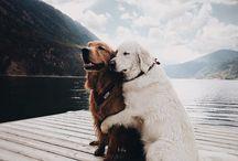 kutyàk