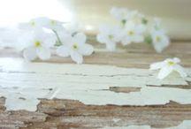 Bloemen * Flowers