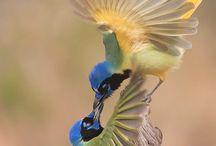 birds / by Gosia Johnston