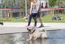 Parco dei cani