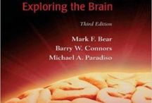 Neuroscience Exploring the Brain 3rd Edition Bear Connors Paradiso Test Bank