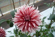 Flower made in Japan / Beautiful Japanese Flower…