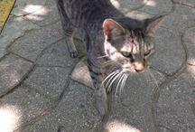 Gatillos / Fotos de gatos