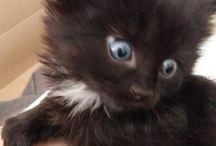My cat, Mimmi