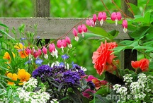 Garden/Outdoor Stuff / by Madeline Hall
