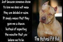 amstaff and pitbull