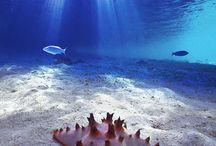 fisker og havdyr