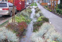 Rain garden