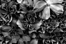 Horticultural Art / Horticultural Art, Fred Michel