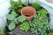 pflanzen/balkon