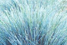 Ornamental Grasses / by Ron Wolford