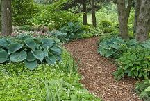 Woodland garden ideas