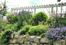 Il giardino / Orto e giardinaggio