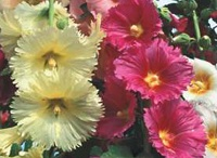 Gardening Visions