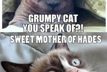 Grumpy Cat / by Sarah Bagby