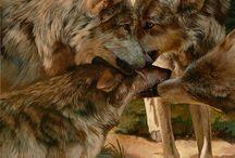 Wölfe und Raben