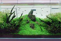 Aquarium Ideas / by Bney Landis