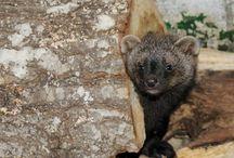 Rescued Wildlife: Babies, Infants & Juveniles