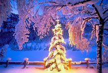 Xmass Forest