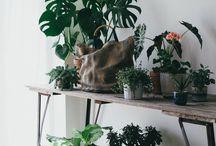 Interiores verdes