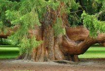Stromy a zvěř / Příroda
