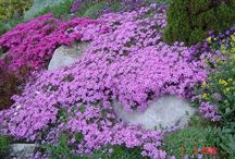 gardening / by Kathy Yanagihara