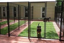 For the love of dogs - Kennel