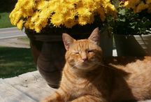 Awesome Louie the Twitter Cat / Awesome Louie, a rescue cat, spreading smiles and joy wherever he goes!