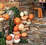 Fall / by Tonya Hight
