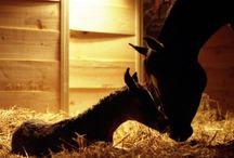 Foal Training