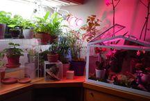gardening living green house indoor / Small example living green house indoor