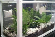 Rostliny pestovani