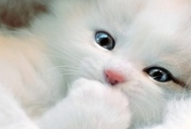 Cute and fluffy!